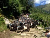 Ghorepani Poonhill Trek Route